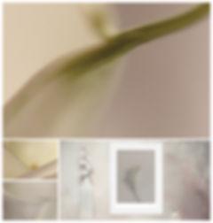 ART PHOTOGRAPHY GALLERY BOTANICAL PANACH