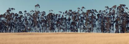 Rural Symmerty | Martin Osner