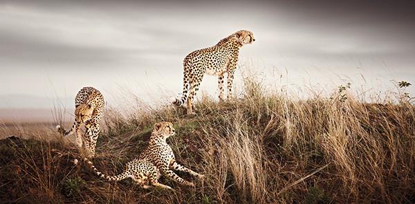 Pride of Africa | Klaus Tiedge