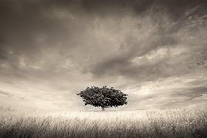 Soltary | Martin Osner