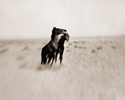 WILD HORSES OF THE NAMIB #1 by Antti Viitala
