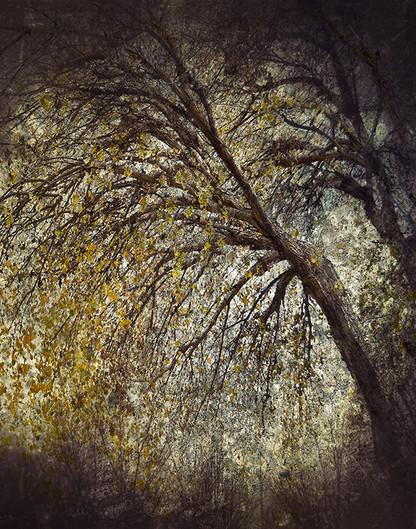 EMINENCE # 6 by Martin Osner