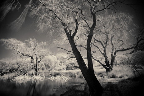 ETHEREAL REVERIE #1  by Martin Osner