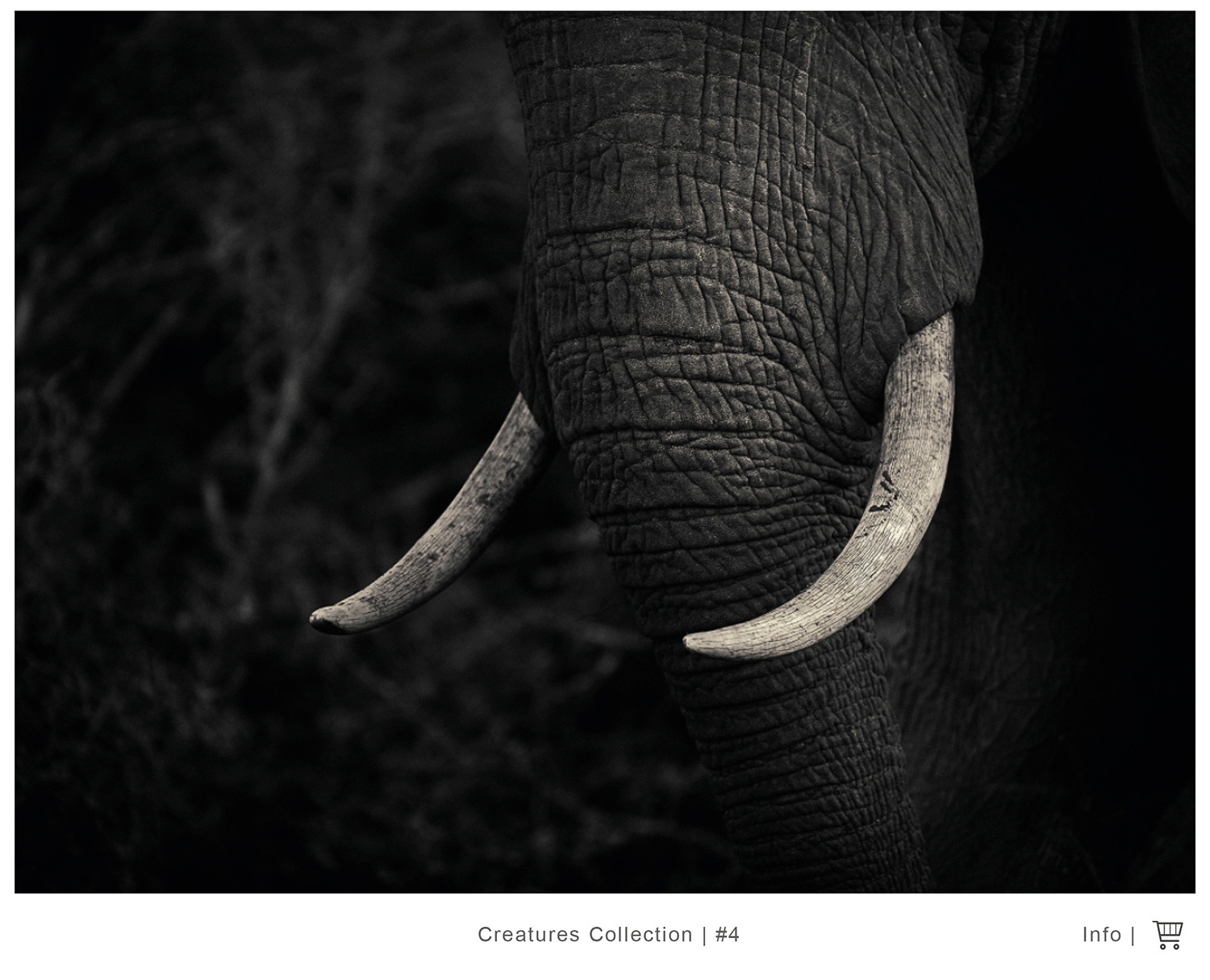 Bw animal prints fine art photography gallery cape town
