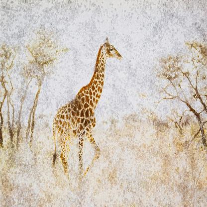 AFRICAN CRYSTAL | GIRAFFE by Fumi Hirai