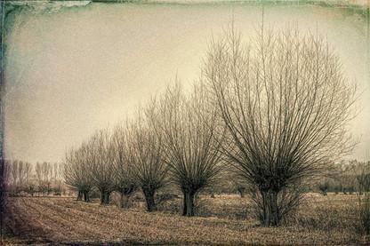SULLEN BEAUTY   LANDSCAPE WITH BEAR TREES by Harry De Zitter
