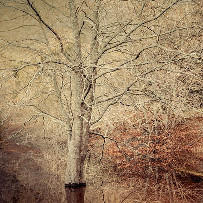 SERAPHIC   CHERRY BLOSSOM by Martin Osner