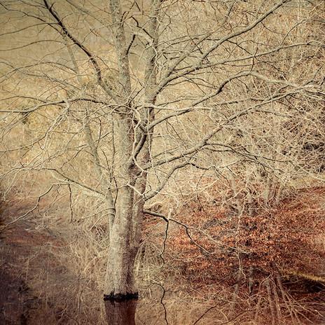 SERAPHIC | CHERRY BLOSSOM by Martin Osner