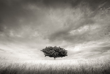 SOLITARY #2 by Martin Osner