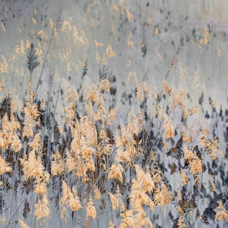 Pasture of Splendor #2 | Samantha Lee Osner