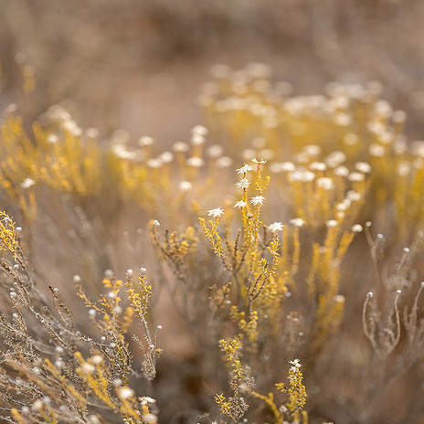 FYNBOS IN AUTUMN by Samantha Lee Osner