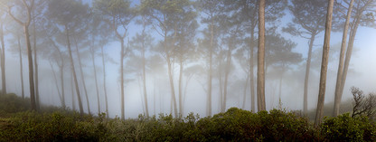 MAJESTIC FOREST by Martin Osner