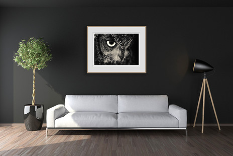 OWL | CREATURES COLLECTION