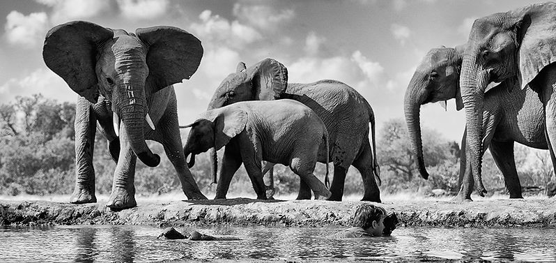Greg du Toit wildlife life photographer in a waterhole photographing elephants