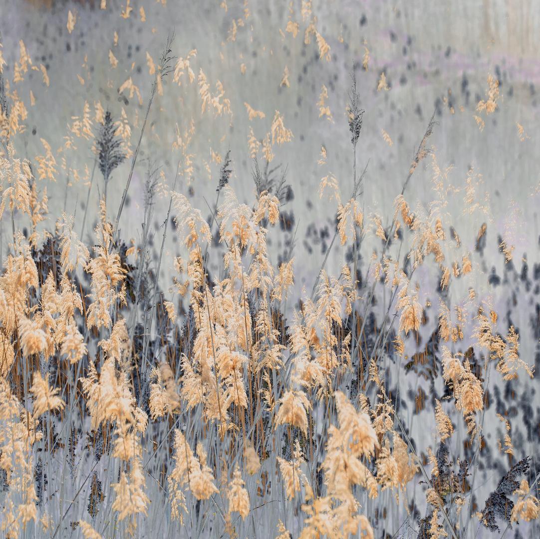 Pasture of Splendor No.2 | Ed 25 | Samantha Lee Osner
