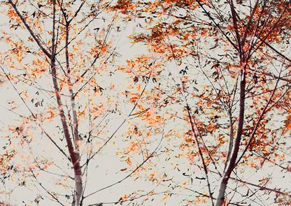 DUET by Martin Osner