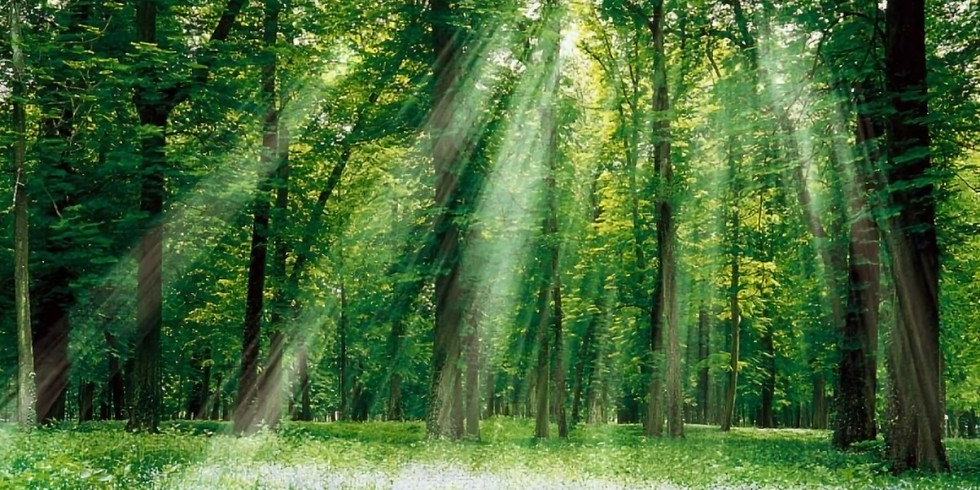 Découverte des petits peuples de la nature et respect de la Terre