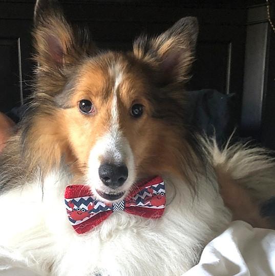 Colin dresses up for work  |  Chicago SEO Lyfe team