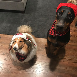 colin and kramer wear hats |  Chicago SEO Lyfe team