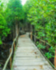 adventure-awesome-boardwalk-726298.jpg