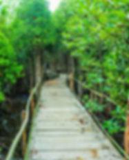 adventure-awesome-boardwalk-726298.jpg