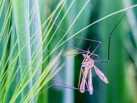 Mosquitoes – what are the options?