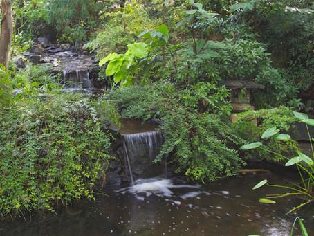 Creating A Habitat Garden