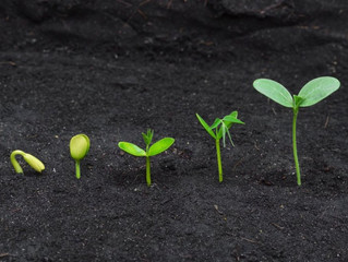 Growth: From Seedling to Sustainable