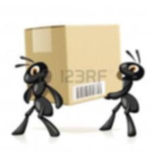 formiche scatola.jpg