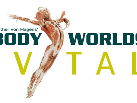 THE BODY WORLDS VITAL NEW ZEALAND TOUR