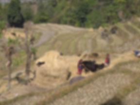 Népal_05_-_038.JPG