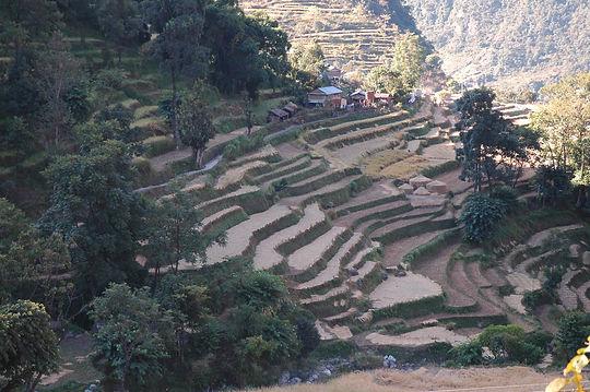 Népal_05_-_035.JPG
