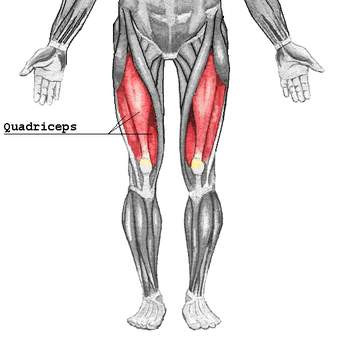 Leg Day Quad Focus and Abs
