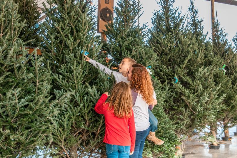 mainstay farm christmas trees