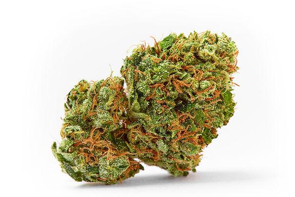 Hanf_Cannabis_hanfexpert.ch