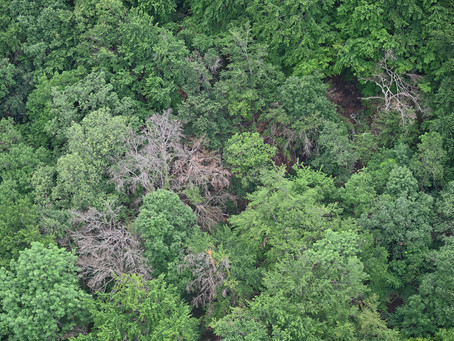 Achtung!  Gefahr durch absterbende Bäume.