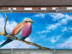 gavs back garden bird