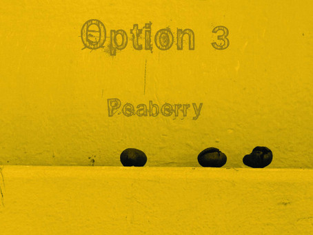 """Option 3's """"Peaberry"""" is officially released!"""