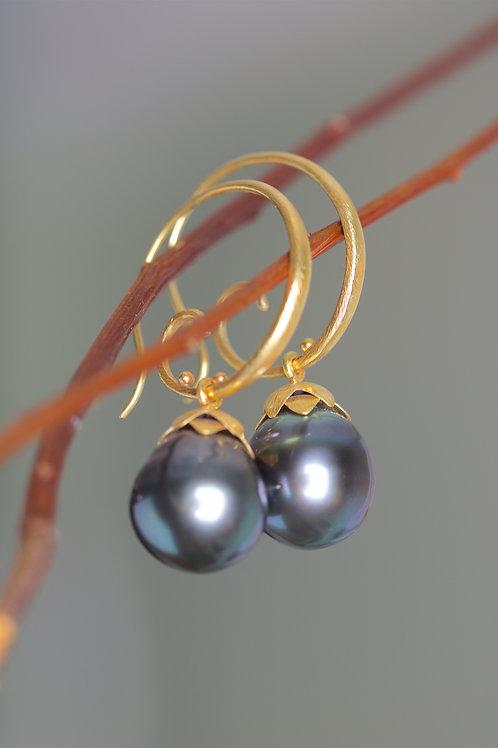Tahitian Pearl Earrings (06211)