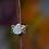 Thumbnail: Opal Sapphire Ring (04039)