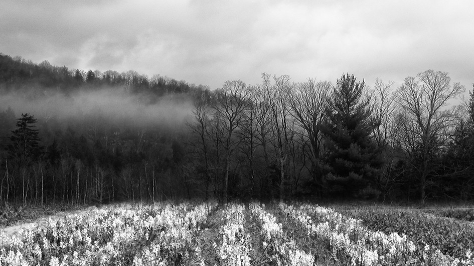 ForestFlora.jpg