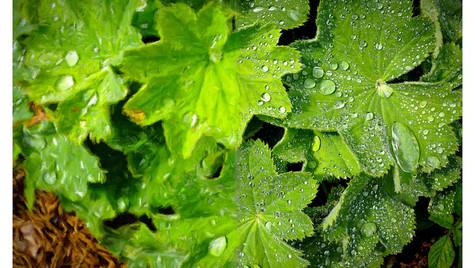 LeafDroplet-Smalls.jpg