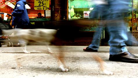 GhostDog copy.jpg