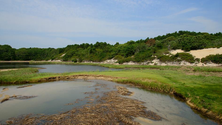 Ponds-1.jpg