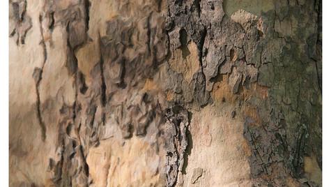 TreeBark-Small.jpg