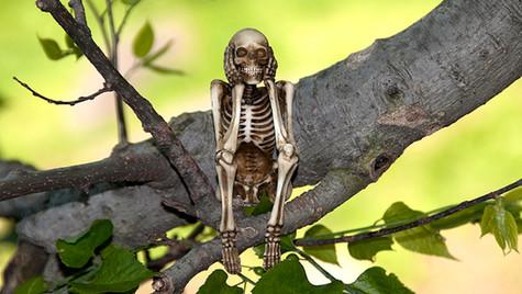 TreeSkeleton.jpg