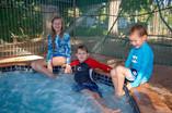 Pool & Spa at Timber Creek Hotel