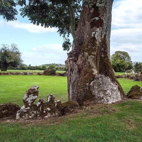 Stone Circle Tree.jpg