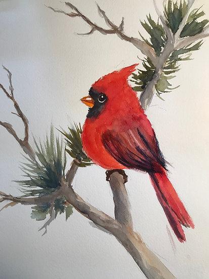 Cardinal by Cindy Sturla