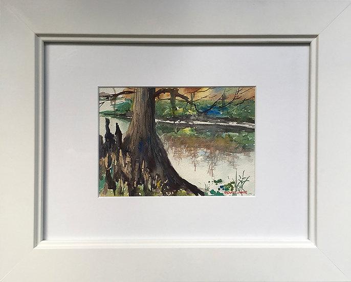 Bald Cypress by Stewart Jones